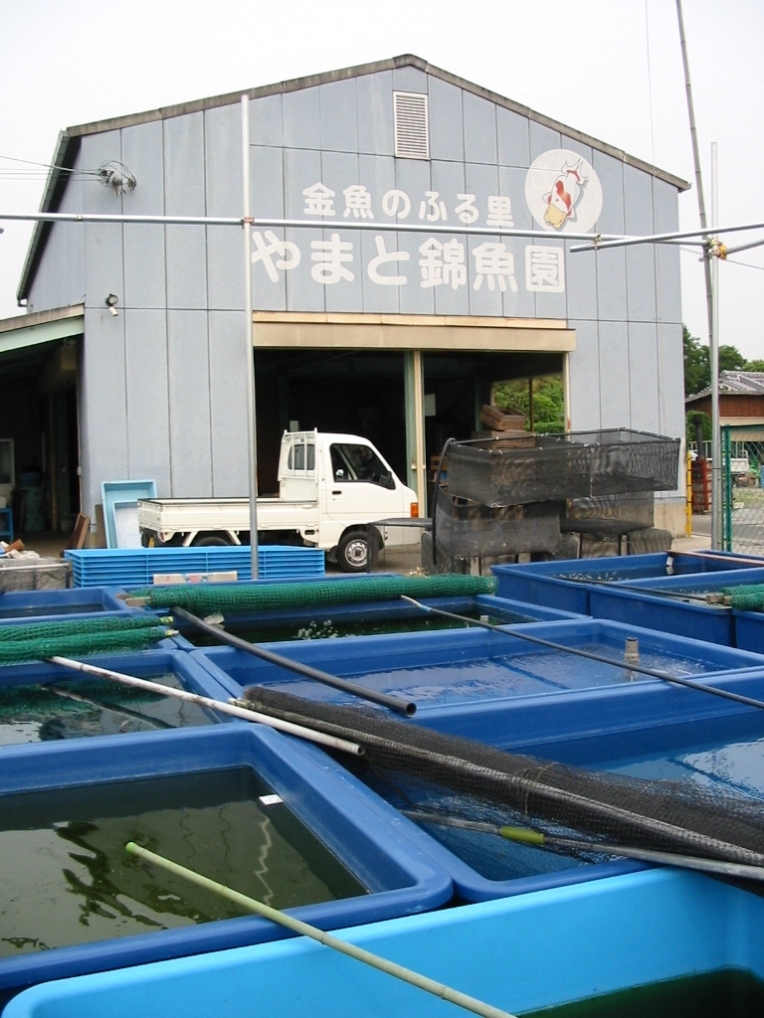やまと錦魚園