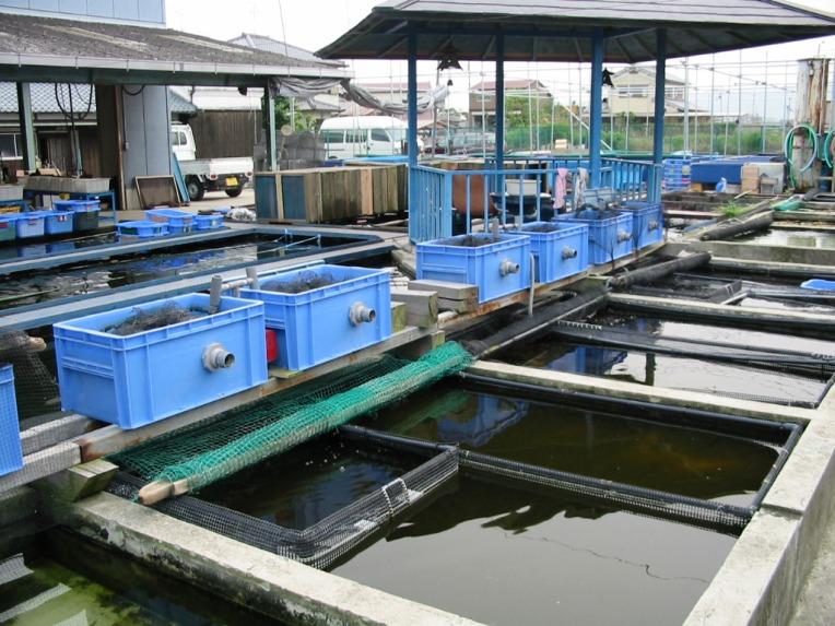 金魚の養殖場